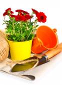 Gardening tools, flowerpot with oaklings flowers on the sacking  — Stock Photo