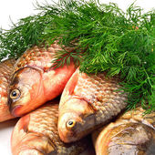Crucian carp fishes with green dill — Stock Photo