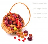 Basket wirh ripe cherry, currants and gooseberries — Stock Photo