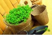 Cress salad on the flower bed with rake, shovel, peat cups, rope — Stock Photo