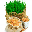 Wheat grass, whet grains in the sack isolated on white — Stock Photo #74111527