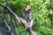 Young Macaque. — Stock Photo