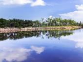 Pond. — Stock Photo