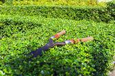 Pruning Shear. — Stock Photo
