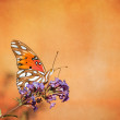 Gulf Fritillary butterfly (Agraulis vanillae) — Stock Photo #55741093