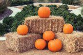 Pumpkin arrangement on hay bales — Stock Photo