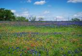 Wildflower field in Texas spring — Stock Photo