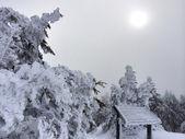 山の雪が多い斜面 — ストック写真