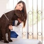badanie psa lekarza weterynarii — Zdjęcie stockowe #63041197