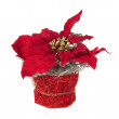 Composition from Poinsettia Plant with branches, cones, ribbons — Stock Photo #59194479