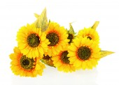 Composition of bright artificial sunflowers on white background. — Stock Photo