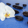 Black spa stones and white orchid flowers over blue background. — Stock Photo #67480467