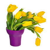 Yellow tulips in lilac vase isolated on white background. — Stock Photo