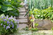 Garden path and planter — Stock Photo