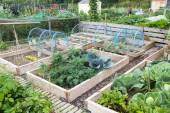 Raised beds in an allotment garden — Stock Photo