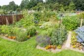 Allotment gardens — Stock Photo