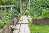 Allotment garden path — Stock Photo