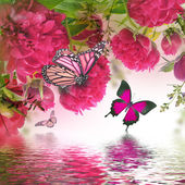 Pink peonies and butterfly — Stock Photo