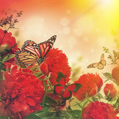 Peonies and butterfly — Stock Photo