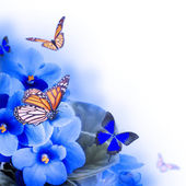 Spring violets and butterfly — Stock Photo