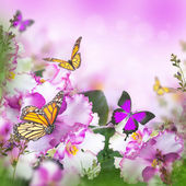 Spring violets and butterfly — Stockfoto