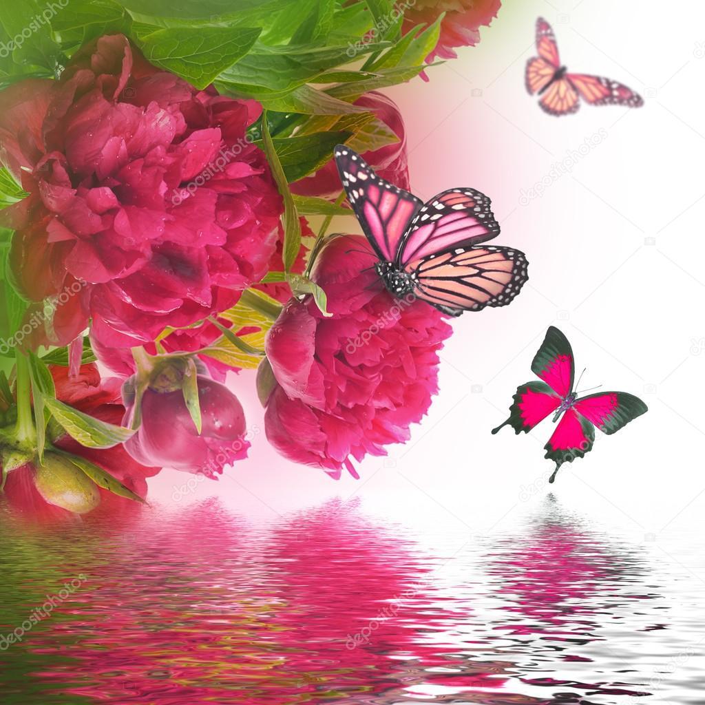 фото бабочки розовые