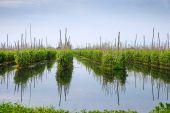 Floating gardens — Stock Photo