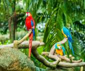 Exotic parrots — Stock Photo
