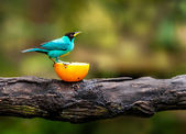 Blue bird on a branch — Stock Photo