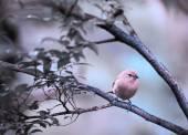 Yellow bird on a branch — Stock Photo