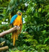 Exotic parrot — Stock Photo