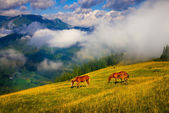 Landscape with fog and horses — Stock Photo