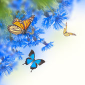 Cornflowers and butterflies — Foto Stock