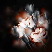 繊細なバラの花束 — ストック写真
