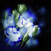 Bouquet of delicate roses — Foto de Stock