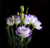 Bouquet of delicate roses — Stockfoto