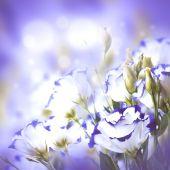 Bouquet of delicate roses — ストック写真