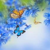 Wild blue cornflowers and butterfly — Stock Photo