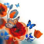 Papillon, les bleuets et les coquelicots rouges — Photo
