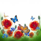 Red poppies, cornflowers and butterfly — Stock Photo