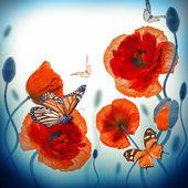 Mariposas y amapolas rojas — Foto de Stock