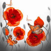 Red poppies and butterfly — Stock Photo