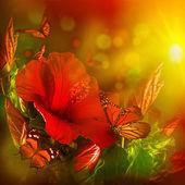 Hibiscus and butterflies — Foto de Stock