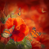 Hibiscus and butterflies — Stock Photo