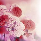 Chrysanthemums with flares, butterflies — Stock Photo