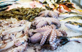 Mediterranean octopus and other seafood — Stock Photo
