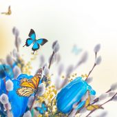 Blue tulips with mimosa and butterfly — Stock Photo