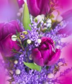 Tulips with mimosa flowers — Stock fotografie