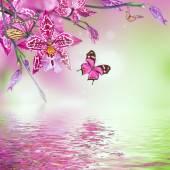 Mariposas y orquídeas tropicales — Foto de Stock