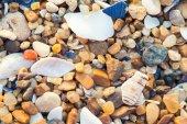 Sea shells background — Stock Photo